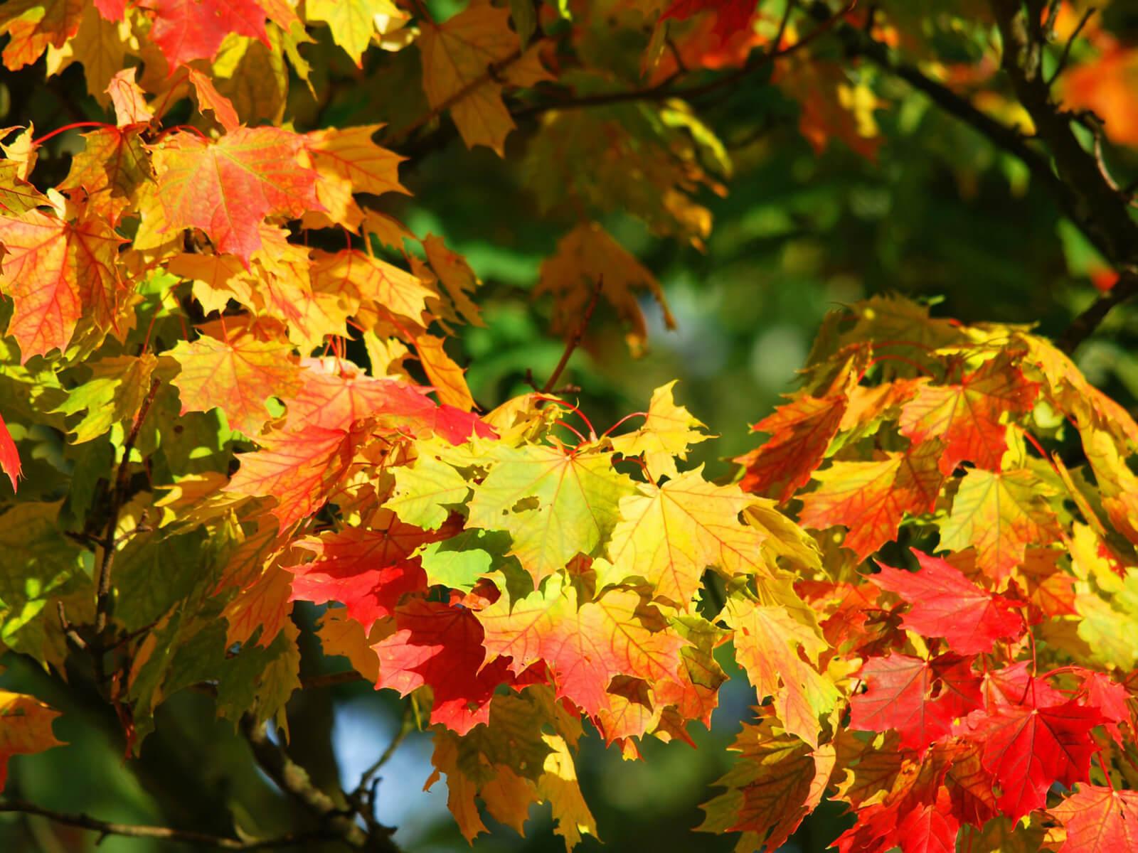 Für den Herbst hat der Ayurveda viele Gesundheitstipps